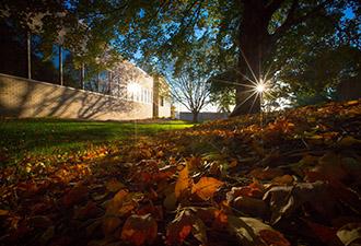 Sun shines through the trees at Creighton.